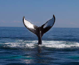 fishing and whale watching charters santa barbara